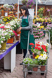 Florist putting the plants into the trolley