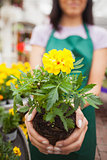 Woman showing a yellow flower in garden center