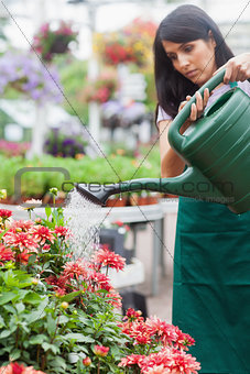 Woman watering plants