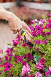 Gardener spading flowers