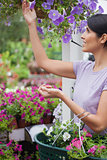 Woman collecting flowers in garden center