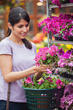 Woman choosing pink flower in garden center