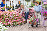 Man pushing the trolley while woman looking at flowers