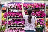 Woman taking a plant
