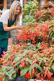 Garden center worker checking plants