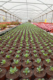 Seedlings in greenhouse