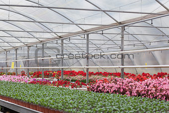 Greenhouse with flowers and shrubs