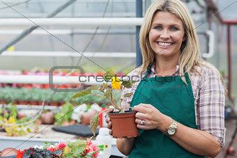 Blonde garden center worker holding flower pot