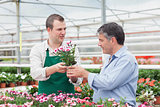 Man and employee discussing potted plant in greenhouse