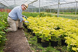 Gardener spading plants