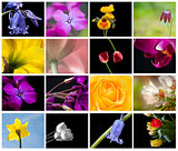 Bright colorful Spring flower storyboard collage