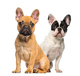 Two French Bulldog puppies, 4 months old, sitting next to each o