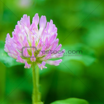 Beautiful Purple Flower against the Green Blurred Background