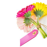 Colorful gerbera flowers with gift tag