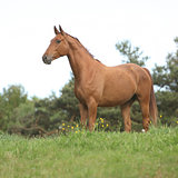 Chestnut horse standing on horizon