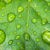 Droplets of the rain