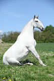 Super sitting horse in nature