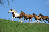 Beautiful batch of horses running on horizon