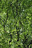 Leafy green branches on tree