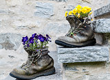 Flowers in boots