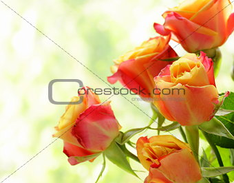 bouquet of orange roses on a natural green background