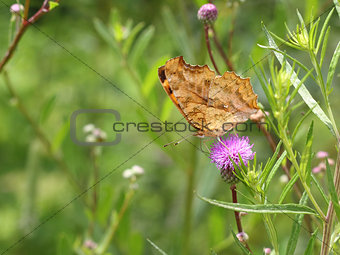 Monarch butterfly on pink flower on green leaf