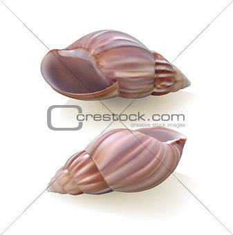 Seashells isolated on white background.