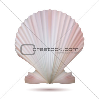 Scallop seashell isolated on white background