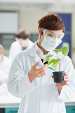 Woman standing at the laboratory holding a plant adding green chemical