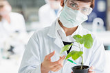 Woman holding a plant adding green liquid to soil
