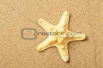 Starfish lie on seacoast