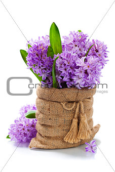 Beautiful Hyacinths