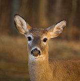 Deer mug shot