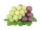 White and red grapes