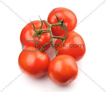 Branch of fresh tomatoes