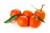 Five ripe tangerines