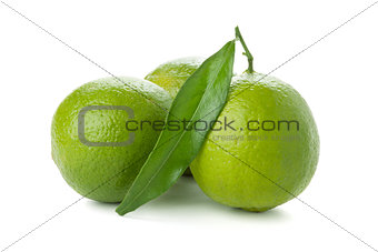 Three ripe limes with green leaf