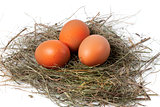 Chicken eggs in nest