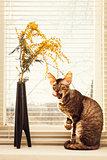 Cat lick oneself
