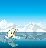 Polar bear and melting ice. Global warming.
