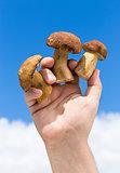 Three Boletus mushroom in hand