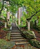 Mountain Temple Trail