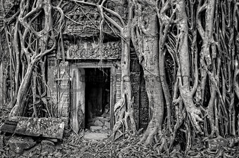 Ancient stone temple door and tree roots, monochrome view