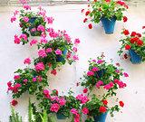 Flowerpots with geranium