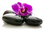 Violet orchid on black spa stones