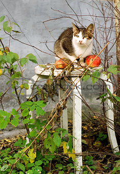 Autumn composition with a cat and an apples
