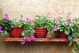 flower pot on a shelf on the wall