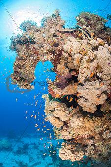 Beautiful tropical coral reef scene
