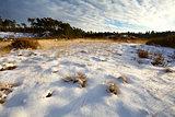 sunny meadows in snow