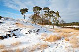 pines on snowy hill